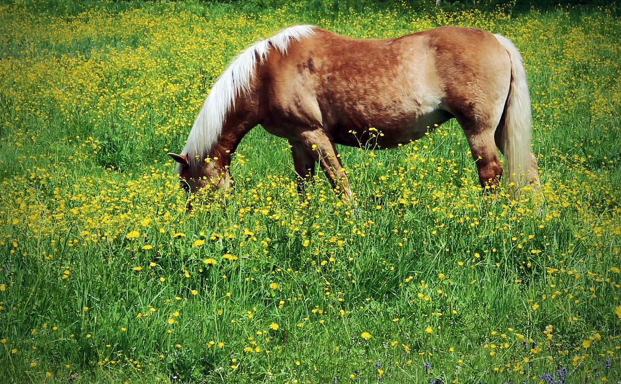 I Retired My Horse Too Early….